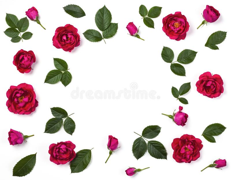 Floral frame made of pink rose flowers, buds and leaves isolated on white background. Flat lay stock photography