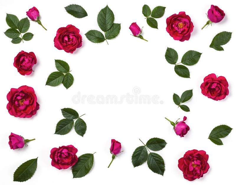 Floral frame made of pink rose flowers, buds and leaves isolated on white background. Flat lay. stock photography