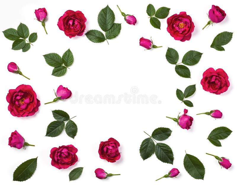 Floral frame made of pink rose flowers, buds and leaves isolated on white background. Flat lay. Top view stock photo