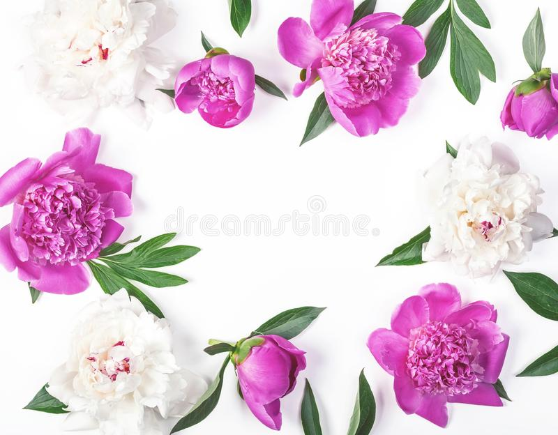 Floral frame made of pink and white peony flowers and leaves isolated on white background. Flat lay. stock photography