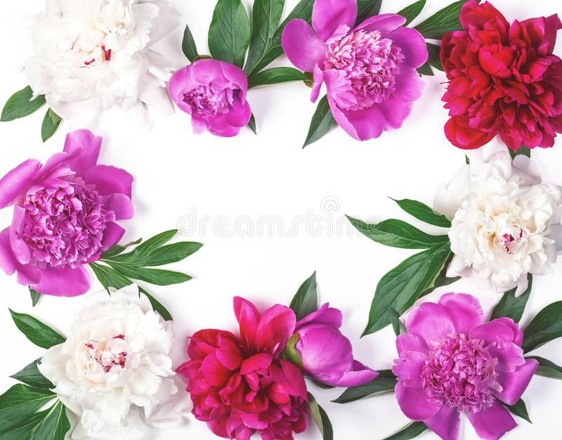 Floral frame made of pink and white peony flowers and leaves isolated on white background. Flat lay. stock photos