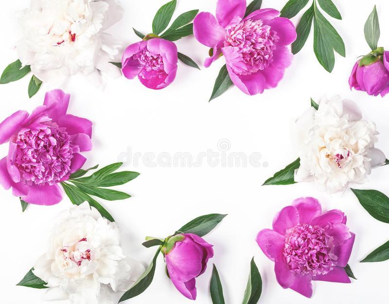 Floral frame made of pink and white peony flowers and leaves isolated on white background. Flat lay. Top view stock photography