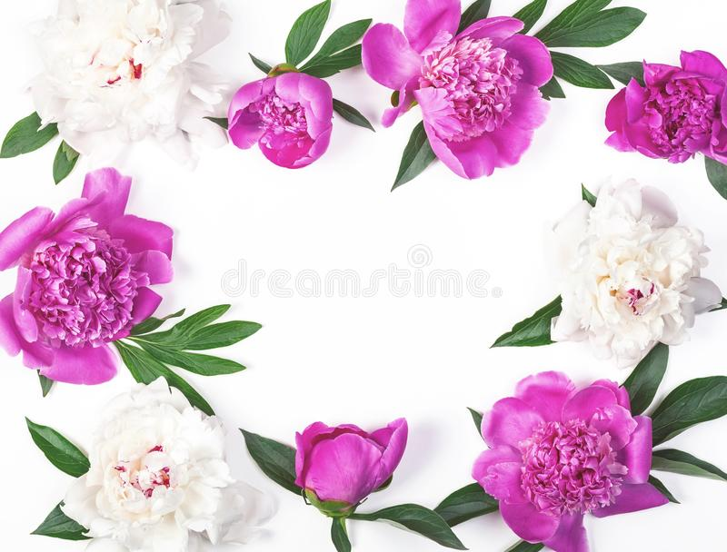 Floral frame made of pink and white peony flowers and leaves isolated on white background. Flat lay. Top view royalty free stock images