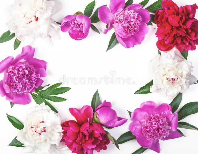 Floral frame made of pink and white peony flowers and leaves isolated on white background. Flat lay. royalty free stock image