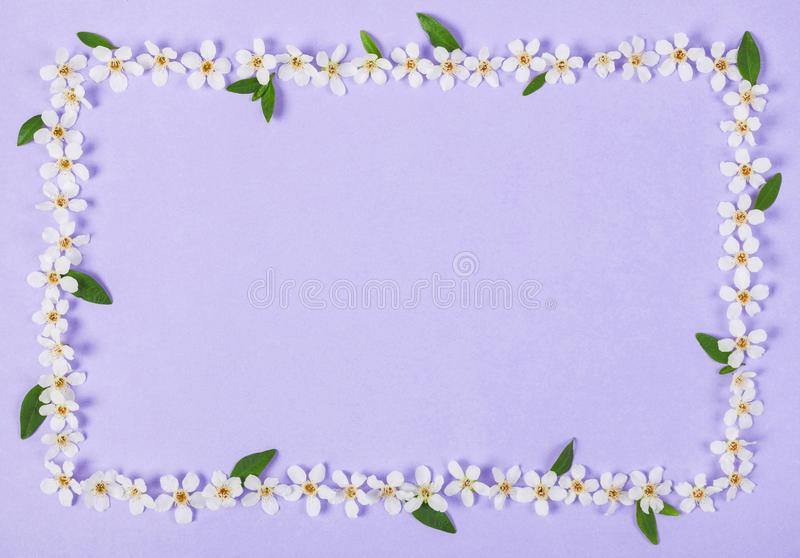 Floral frame made of white spring flowers and green leaves on pastel lilac background. Flat lay. stock image