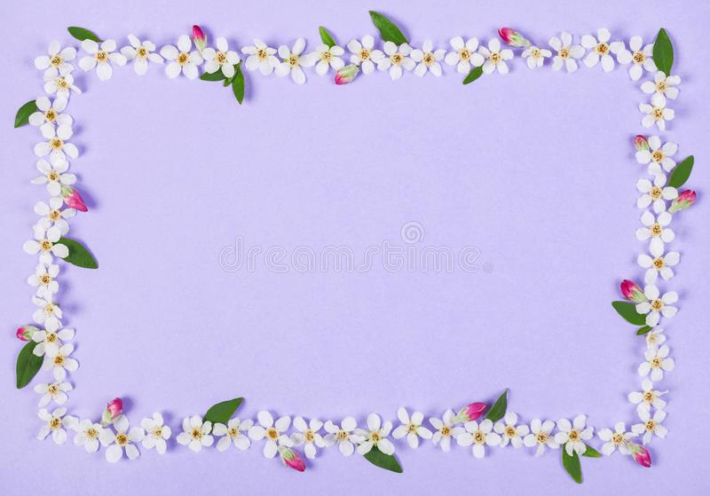 Floral frame made of white spring flowers, green leaves and pink buds on pastel lilac background. Top view. Flat lay stock image