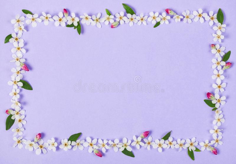 Floral frame made of white spring flowers, green leaves and pink buds on pastel lilac background. Flat lay. royalty free stock images