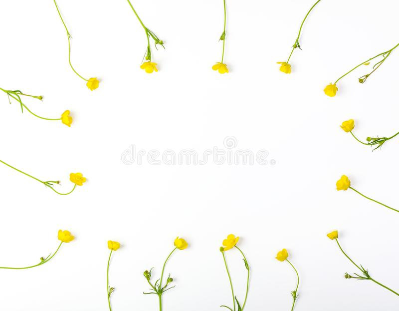 Floral frame made of yellow buttercups flowers isolated on white background. Top view with copy space. stock image