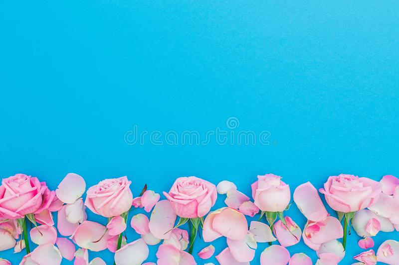 Floral frame with pastel roses buds and petals on blue background. Flat lay, Top view. Pink roses flowers texture. Valentines day. Floral frame with pastel roses royalty free stock photos