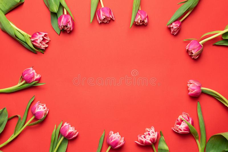 Floral frame with pink peony tulips on coral background. Top view with copy space. Flower composition, greeting or invitation card design template. Mother`s stock photos