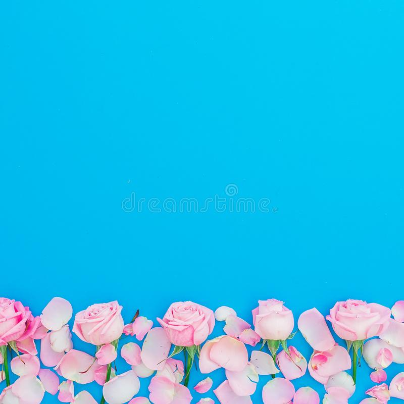 Floral frame of pink roses and petals on blue background. Flat lay, Top view. Woman day holiday. Floral frame of pink roses and petals on blue background. Flat stock photos