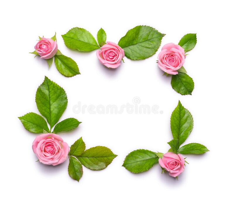 Floral frame with pink roses on a white background. Border of flowers royalty free stock photography