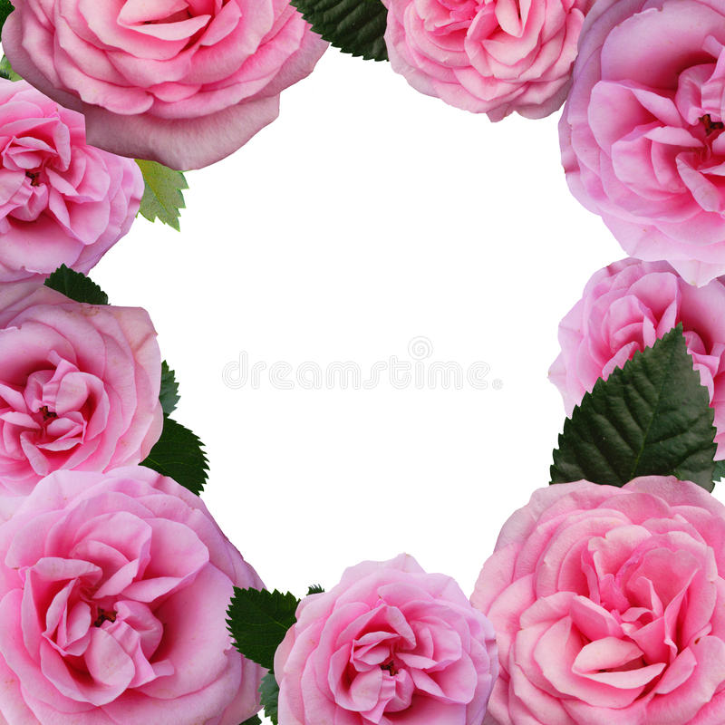 Free Floral Frame - Roses Royalty Free Stock Images - 10780659