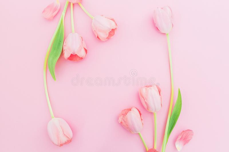 Floral frame with tulips flowers on pink background. Flat lay, top view. Spring time background with copy space royalty free stock photos