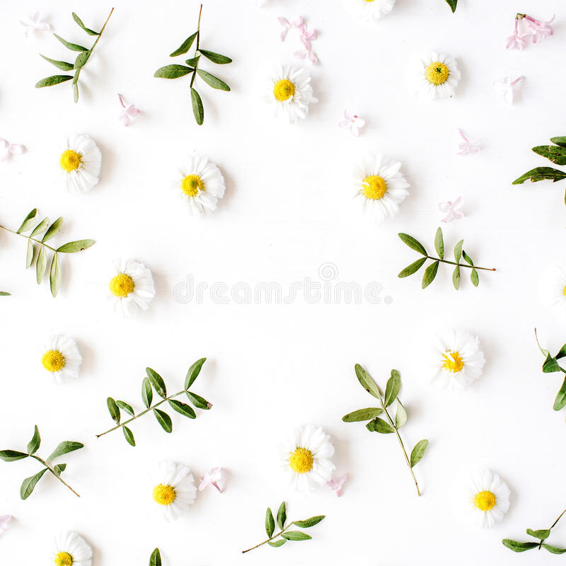 Free Floral Frame With Chamomile Flower And Green Branches Royalty Free Stock Photo - 72264615