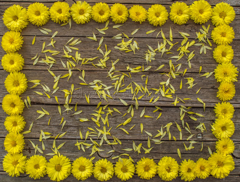 Floral frame. Yellow flowers on wooden background stock images