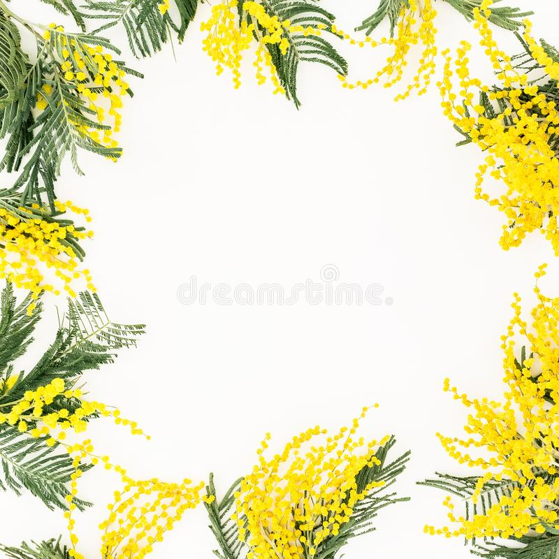 Floral frame of yellow mimosa branches on white background. Flowers of woman day. Flat lay, top view royalty free stock image