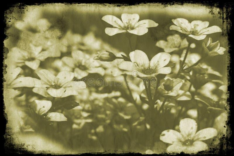 Floral grunge royalty free stock photos