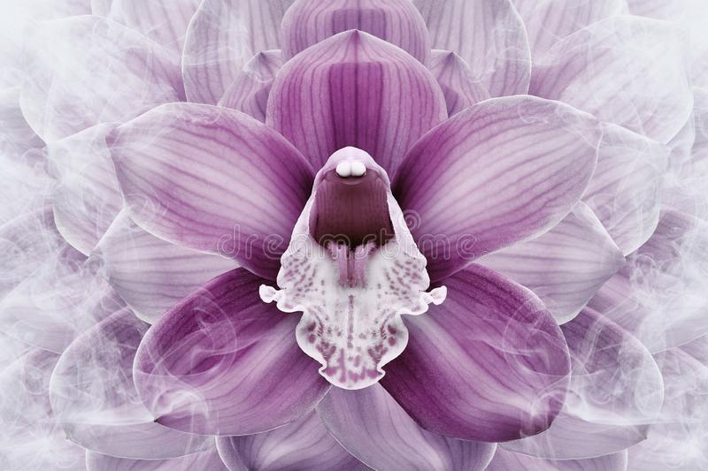 Floral halftone pink and white background. Flower and petals of a pink orchid close up. stock photography