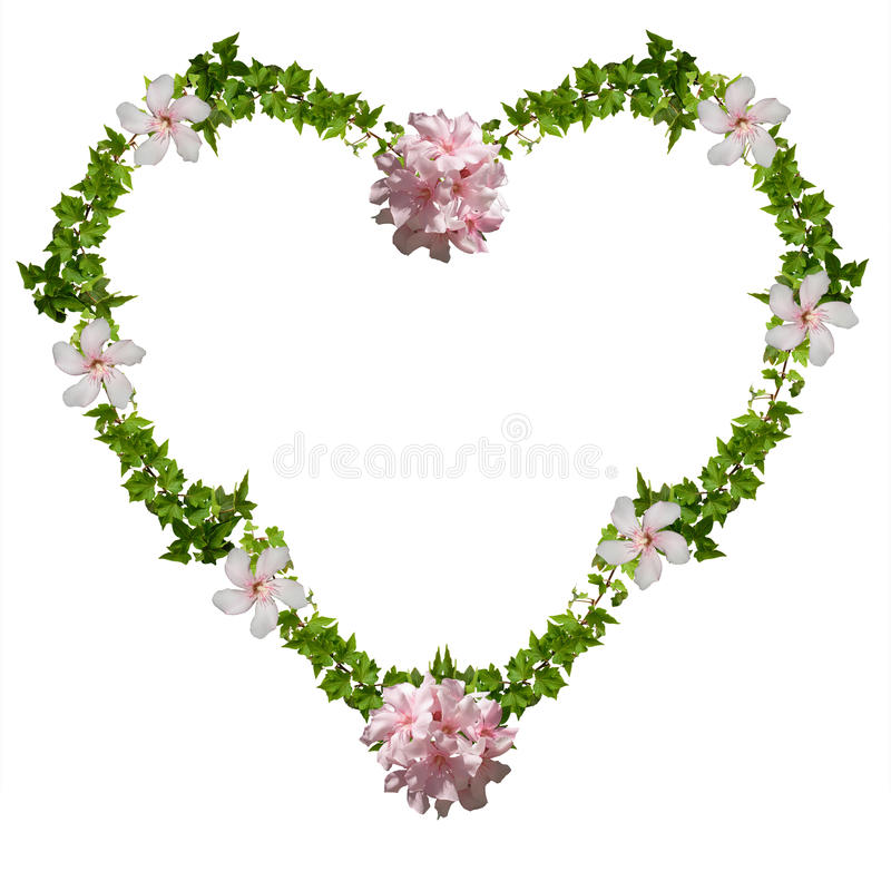 Floral heart. Ivy and oleander - isolated on the white background, frame for your text or picture royalty free stock photography