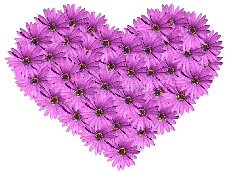 Floral heart. Isolated on white royalty free stock photography
