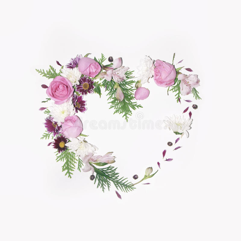Floral heart frame on white background. Floral heart frame on a white background chrysanthemums flowers, roses, thuja twigs, alstroemeria, daisies stock photography
