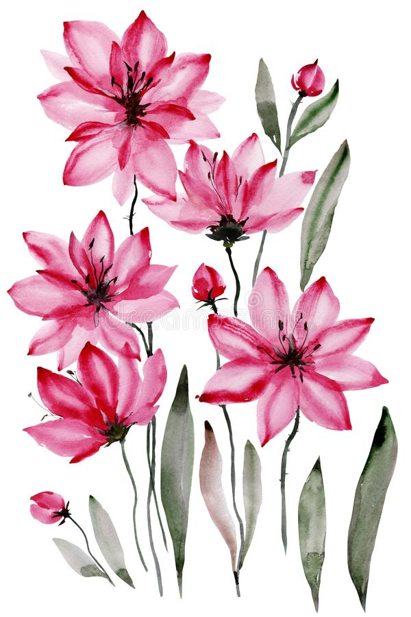 Floral illustration. Beautiful pink flowers with black stamens isolated on white background. Watercolor painting. Hand drawn and painted royalty free illustration