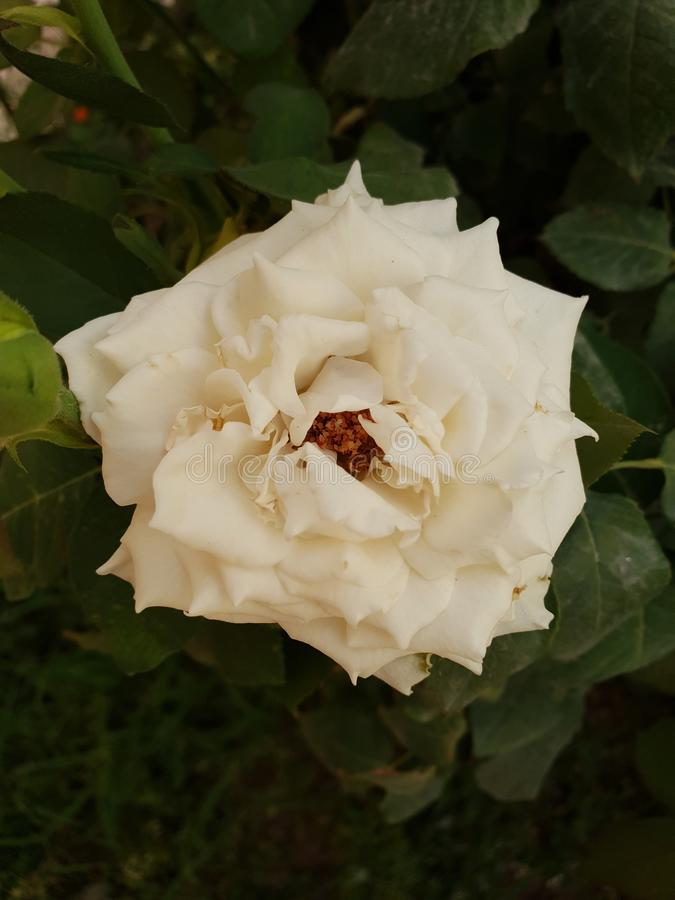 Floral jardine lizenzfreie stockfotos