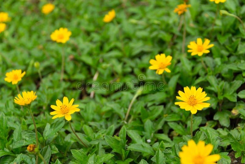 Floral jaune de nature photos stock