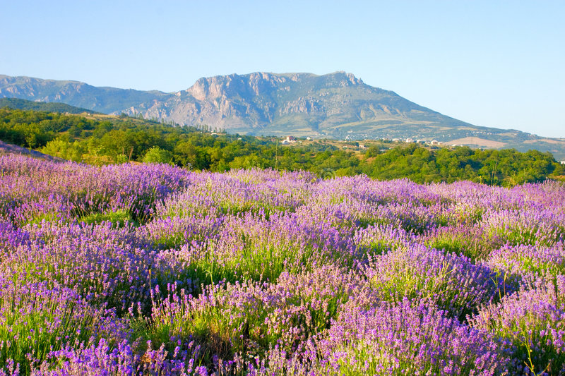 Floral Landscape Royalty Free Stock Photography