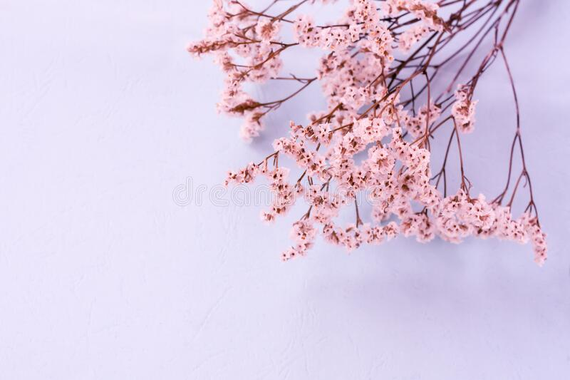 Floral layout with a lot of tiny white flowers on pale bluish pink pink toned background with copy space, blurred stock images