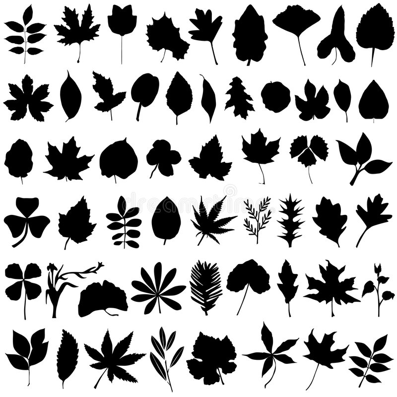 Floral and leaf vector. Collection of floral and leaf vector royalty free illustration