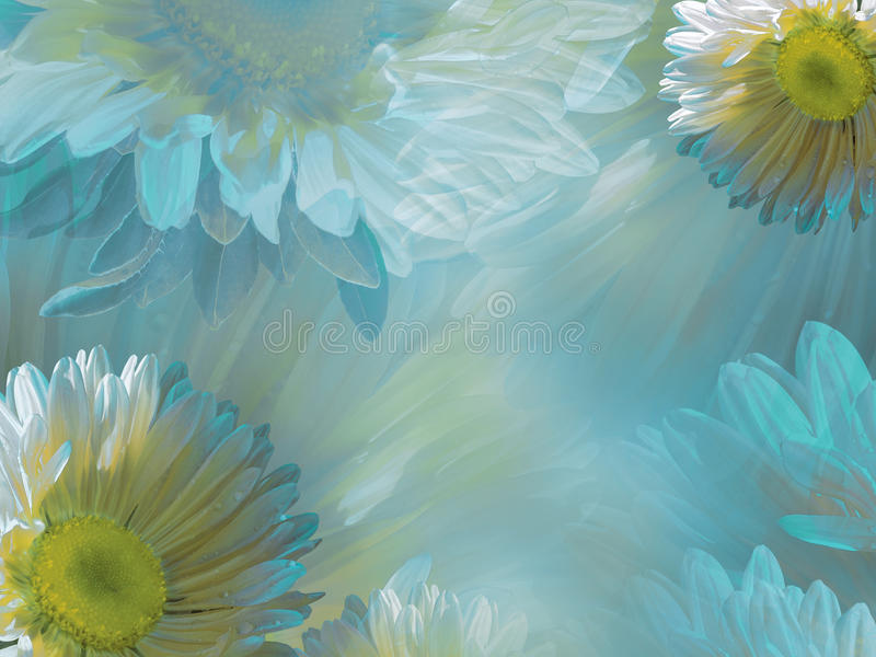 Download Floral Light Turquoise White Beautiful Background Of Daisy.  Wallpapers Of Flowers Yellow Chamomile Nice Design