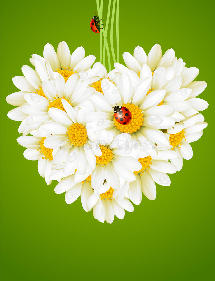 Download Floral Love Card (camomile Heart) Stock Vector - Image: 14122373