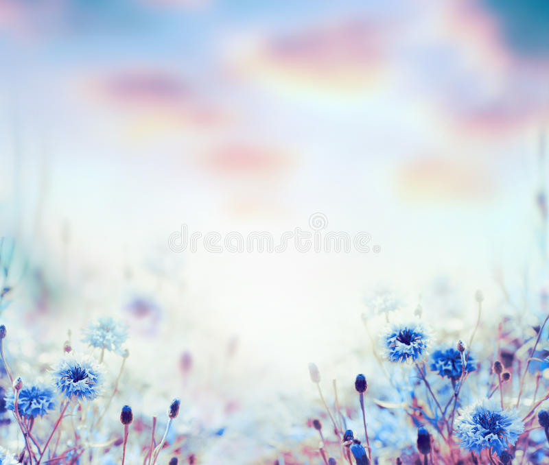 Floral nature background with cornflowers in garden or park royalty free stock photography