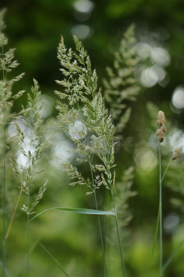 Floral nature background in forest. Nature background in the forest, grass detail with bokeh stock photo