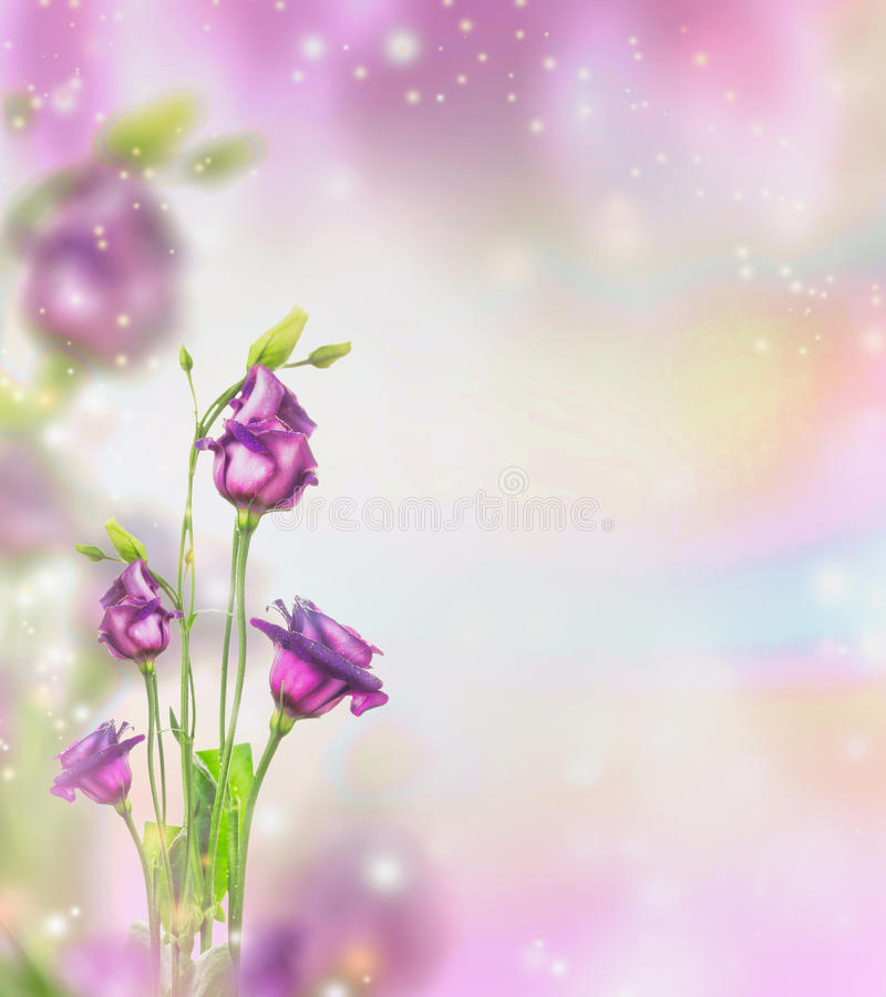 Floral nature background with purple garden flowers and bokeh stock photos
