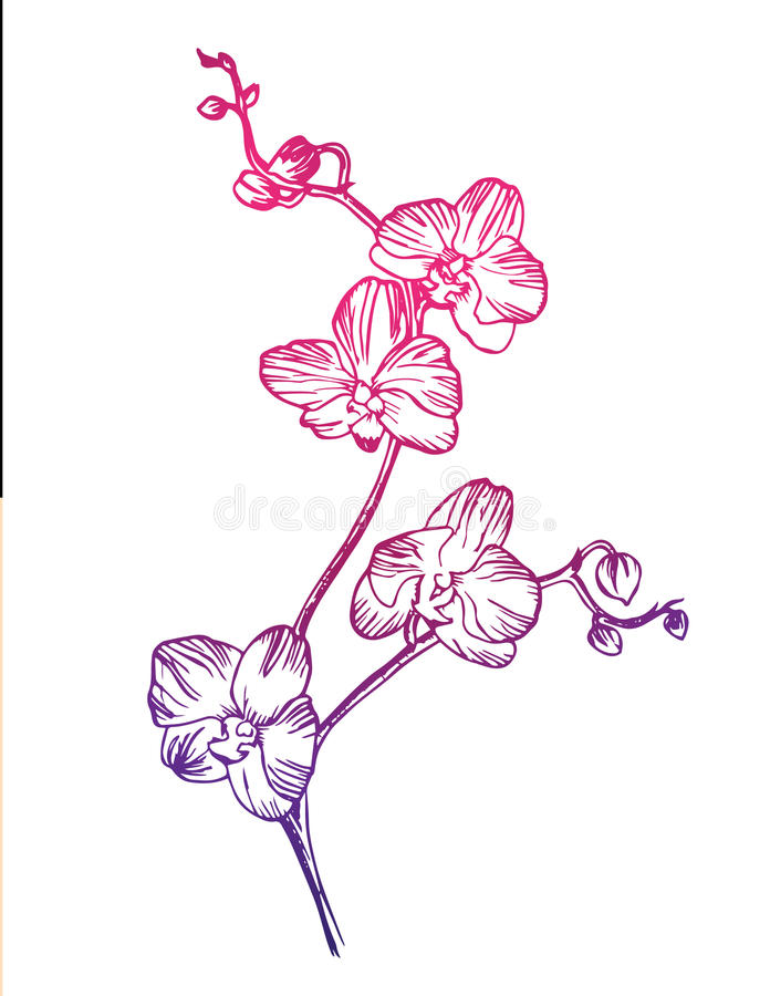 Floral orchid royalty free stock photography