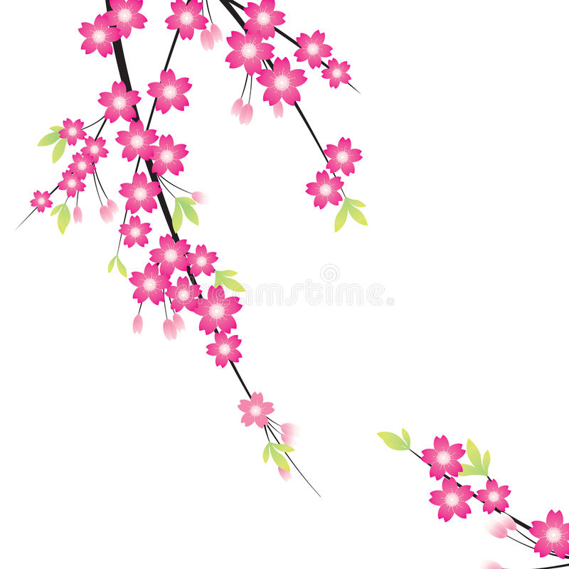 Floral Ornament - Sakura Royalty Free Stock Photography