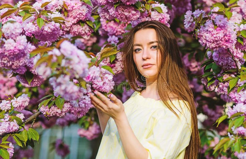 Floral paradise. Floral shop. Girl in cherry blossom flower. Sakura tree blooming. Soft and tender. Gorgeous flower and royalty free stock photo