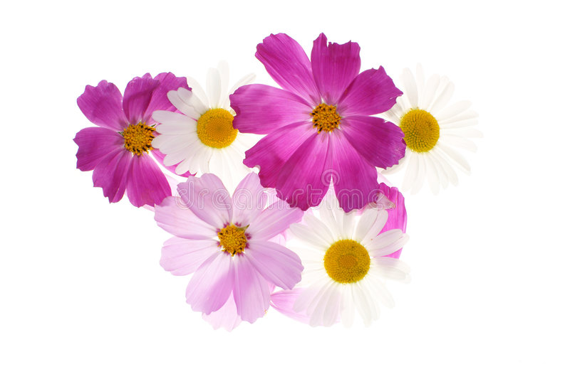 Floral pattern. With daisy and pink flowers stock image