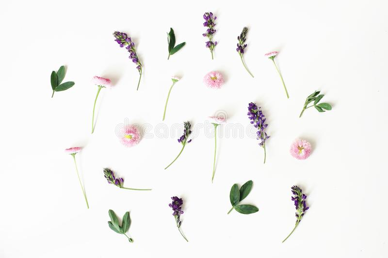 Floral, pattern, botanical composition. Pink daisy and purple alfalfa flowers isolated on white table background. Styled royalty free stock images