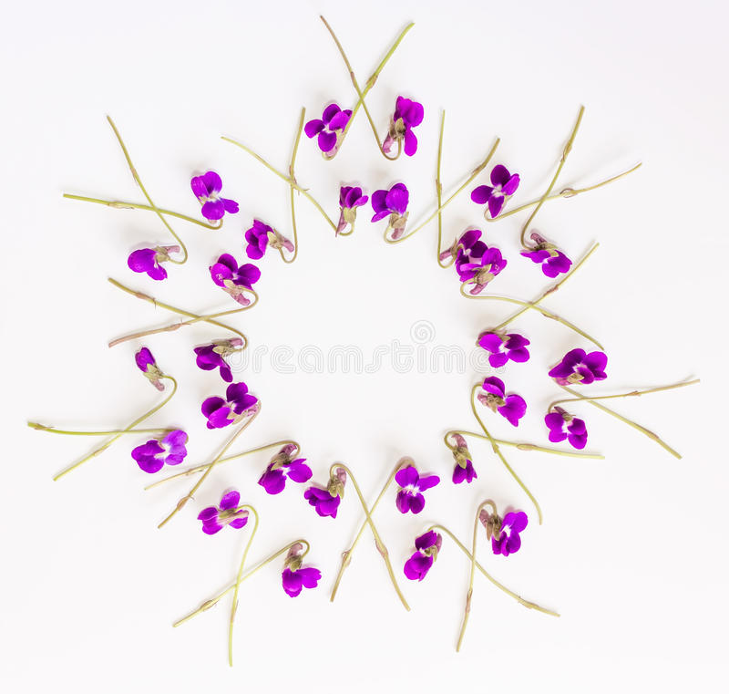 Floral pattern circle Frame made of small forest flowers violet on white background stock images