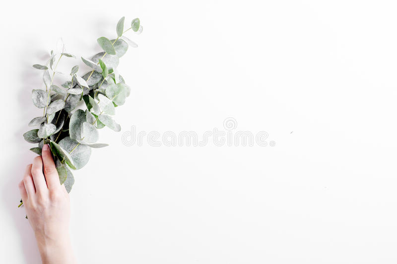 Floral pattern with green leaves on white background top view mockup. Floral pattern with green leaves of eucalyptus in hand for spring design on white stock image