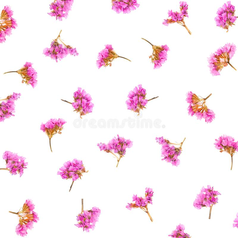 Floral pattern made of Limonium or Statice flowers isolated on white background. Flat lay. Top view royalty free stock image