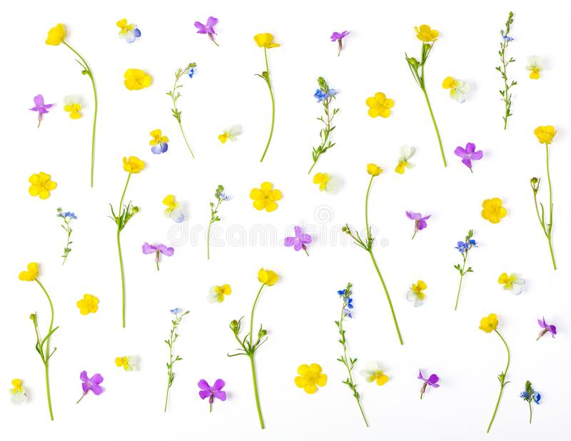 Floral pattern made of meadow flowers isolated on white background. Flat lay. Top view stock photo