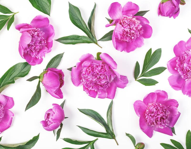 Floral pattern made of pink peony flowers and leaves isolated on white background. Flat lay. royalty free stock photography