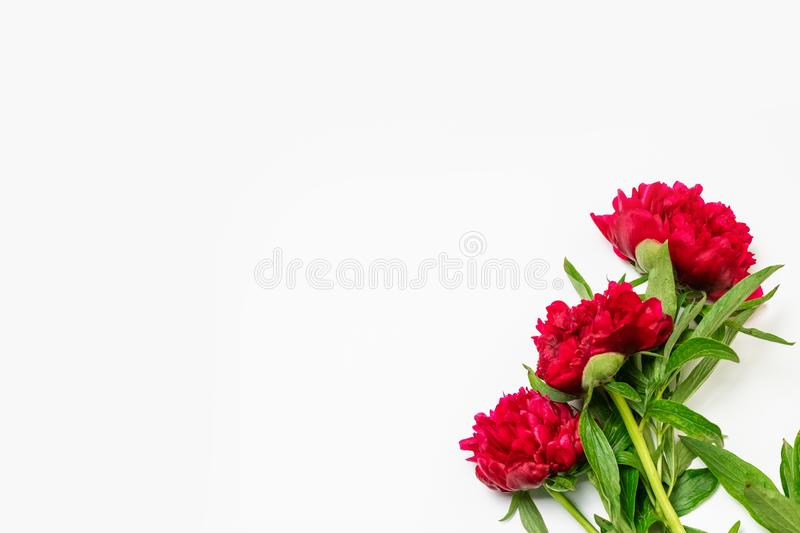 Floral pattern made of pink peony flowers and leaves isolated on white background. Top view. Floral pattern made of pink peony flowers and leaves isolated on royalty free stock photography