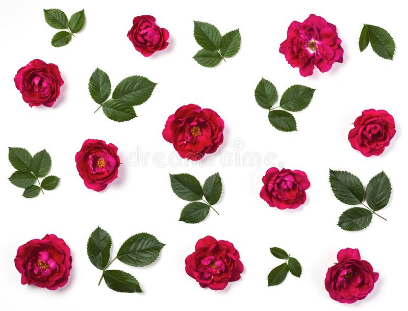 Floral pattern made of pink rose flowers and green leaves isolated on white background. Flat lay. Top view stock image