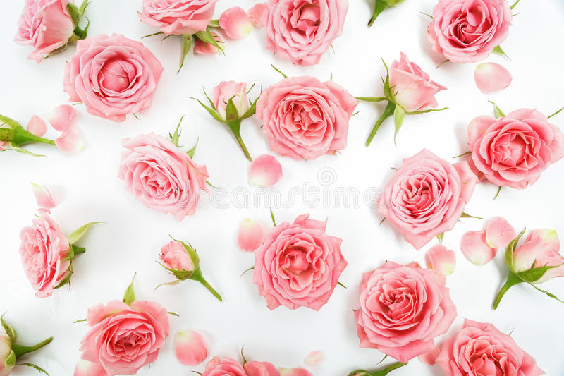 Floral pattern made of pink roses, green leaves, branches on white background. Flat lay, top view. Floral pattern. Floral pattern made of pink roses, green stock images